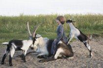 Menina brincando com cabras contra a grama alta — Fotografia de Stock