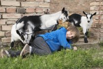 Girl playing with goats while lying on grass — Stock Photo