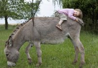 Cute girl laying on donkey in field — Stock Photo