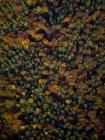 Vista dall'alto degli alberi autunnali — Foto stock