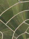 Blick von oben glatt grüne Pflanzen — Stockfoto