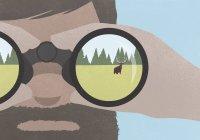 Riflessione dell'alce in campo in un binocolo tenuto da un uomo con la barba — Foto stock