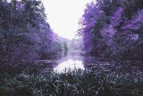 Ідилічне purple дерев уздовж спокійна ставок, Берлін, Німеччина — стокове фото