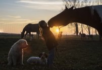 Silhouette girl and horse kissing on farm at sunset — Stock Photo