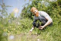 Улыбающийся мужчина с бородой сажает саженцы в солнечном огороде — стоковое фото