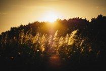 Puesta de sol sobre árboles y plantas siluetas - foto de stock