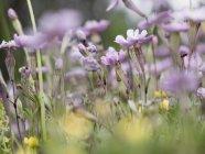 Фіолетові квіти на полі вдень — стокове фото