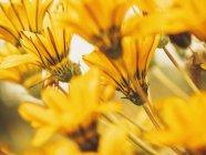 Меня закрывают апельсиновыми цветами — стоковое фото