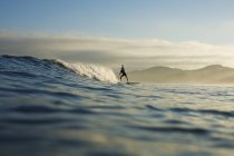 Silhouette of paddle boarder riding ocean wave, Sayulita, Nayarit, Mexico — Stock Photo
