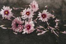 Fleurs et pétales roses — Photo de stock