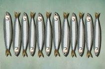 Sardines en rangée sur fond vert — Photo de stock