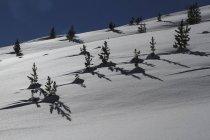 Деревья и тени на солнечном, заснеженном склоне горы, Lue, Кантон Гризонс, Швейцария — стоковое фото