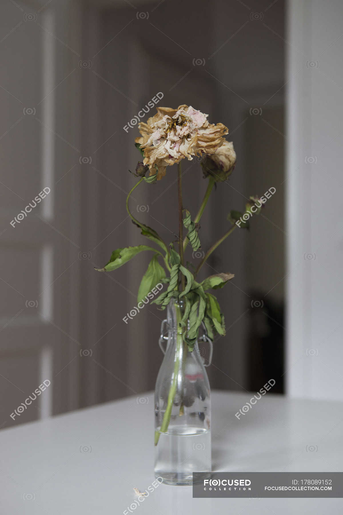 Dried Flowers In Glass Vase At Table Copy Space Fragility Stock Photo 178089152