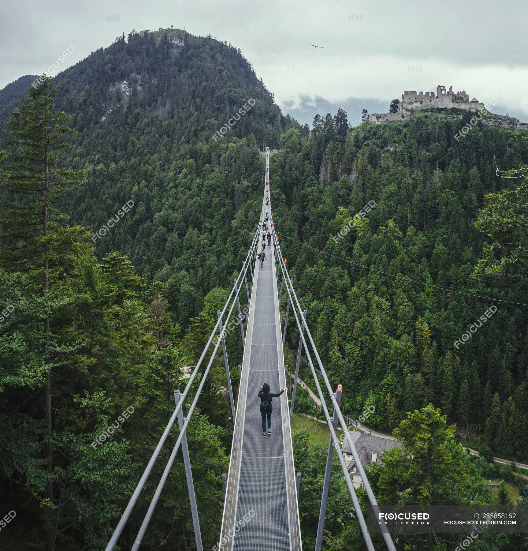 People walking across suspension bridge over green treetops, Tyrol ...