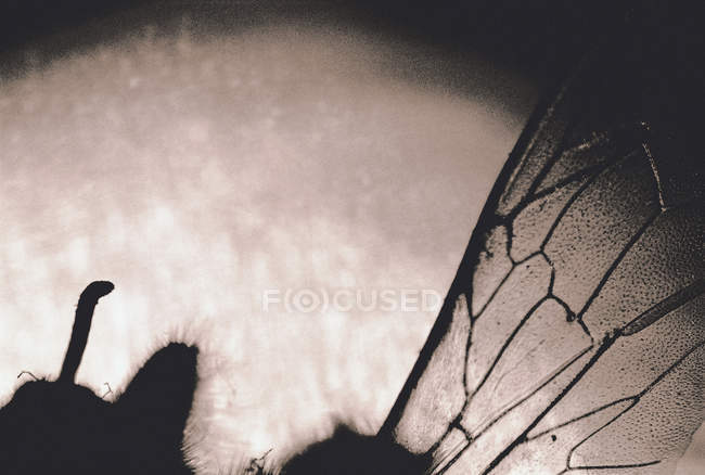 Close up view of transparent insect wing — Stock Photo