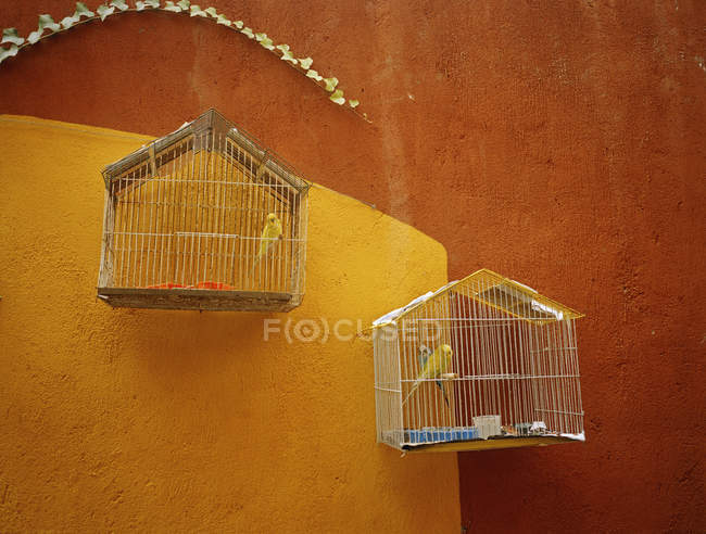 View of canaries in separate cages on brown wall — Stock Photo