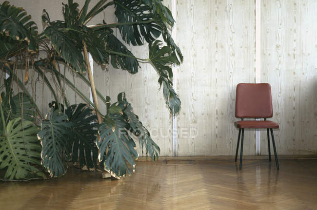 Front view of chair beside plant with big leaves in a room — Stock Photo