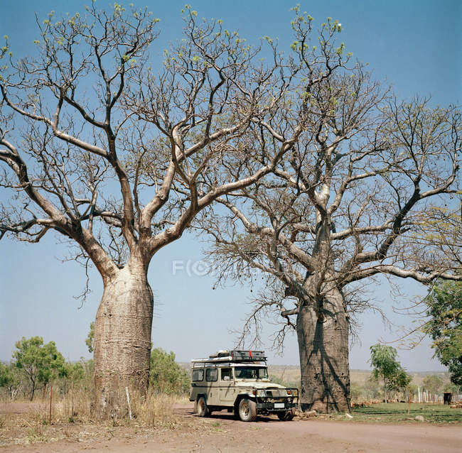 Off-road vehicle amid two baobab trees at countryside — Stock Photo