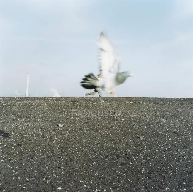 Paloma volando sobre persona corriendo en el fondo - foto de stock