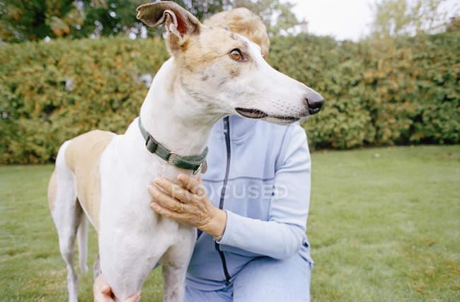 Жінка palming hound dog на зеленій галявині — стокове фото