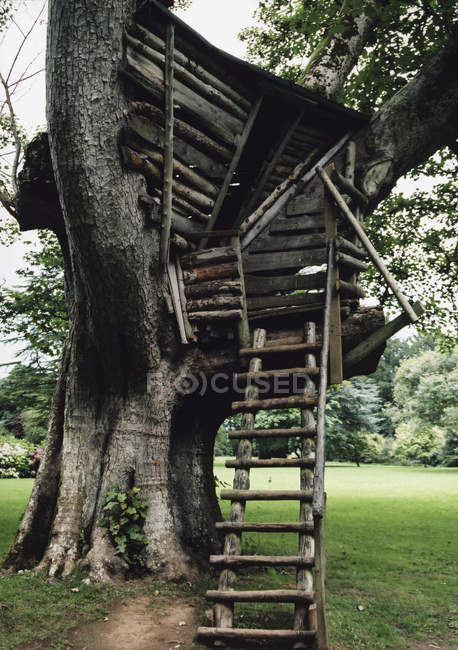 Handmade ladder leading up to tree house — Stock Photo