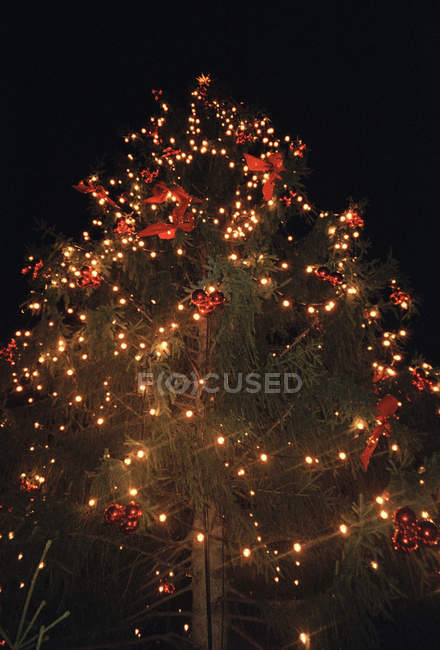 Christmas tree with lighted garland over night sky — Stock Photo