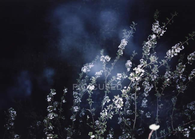 Zweige mit Wildblumen auf Nacht-Hintergrund — Stockfoto