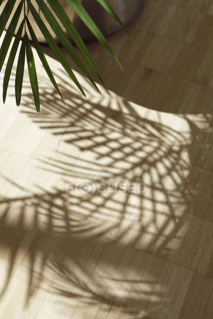 Palm tree leaves shadow on wooden floor — Stock Photo