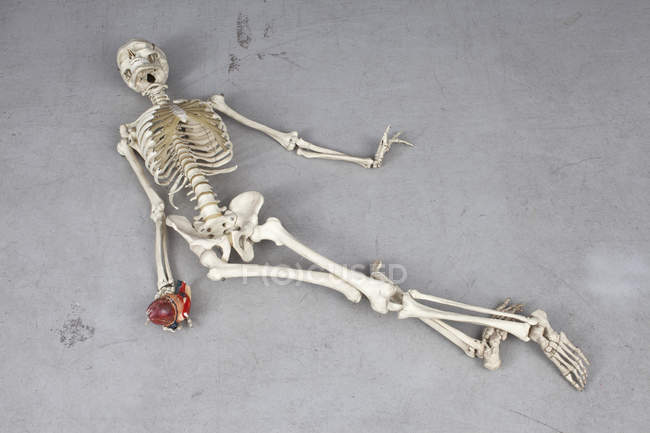 Top view of human skeleton placed on floor in death pose — Stock Photo