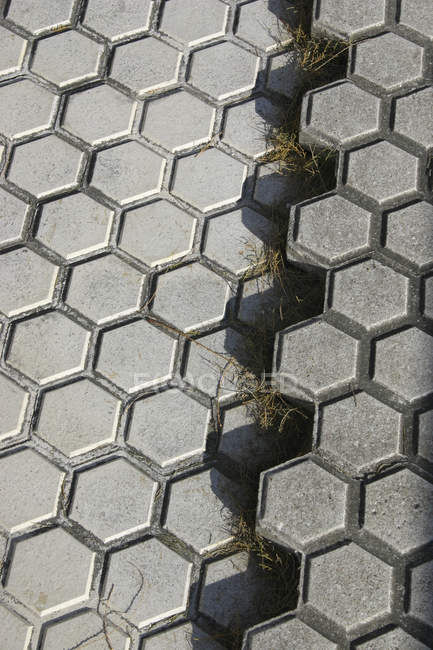 Close up view of ruptured pavement with grass growing at gap — Stock Photo