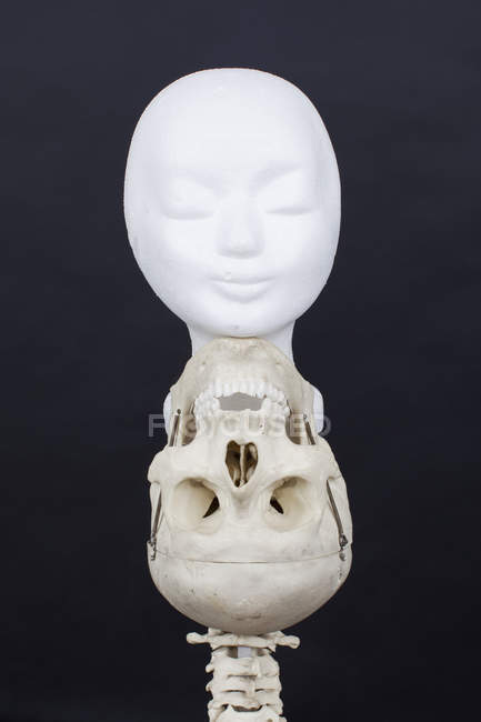 Gypsum mask on human skull over black background — Stock Photo