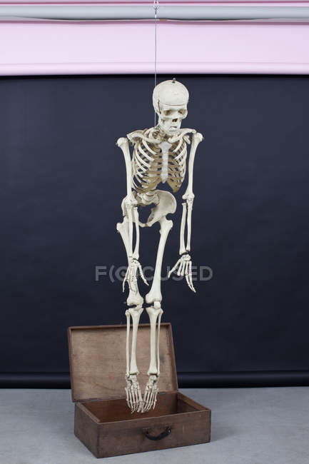 Human skeleton rise out of the box — Stock Photo