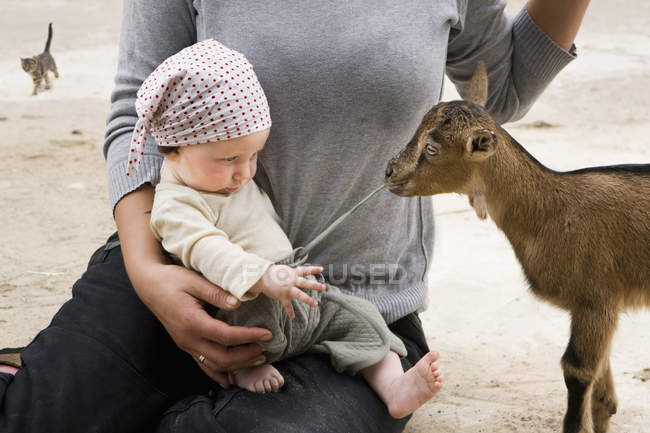 A goat pulling on the drawstring of a baby's pants — Stock Photo
