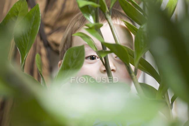 Criança que espreita atrás da planta — Fotografia de Stock