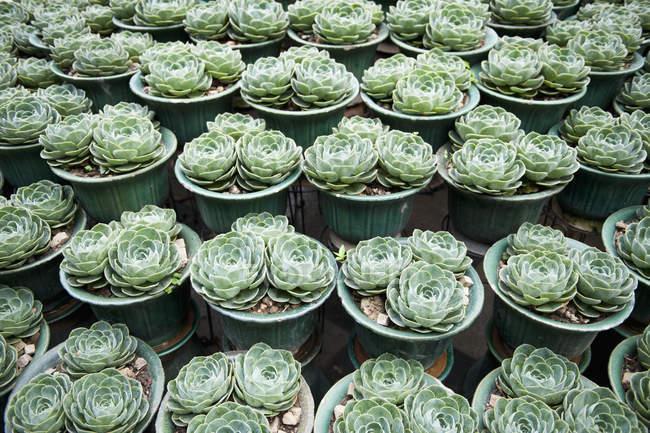 Tiro de quadro completo de linhas de vasos de plantas — Fotografia de Stock