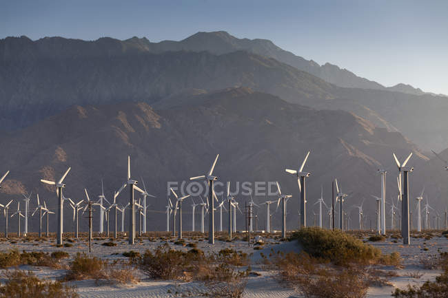 Rows of wind turbines in desert lansdcape — Stock Photo