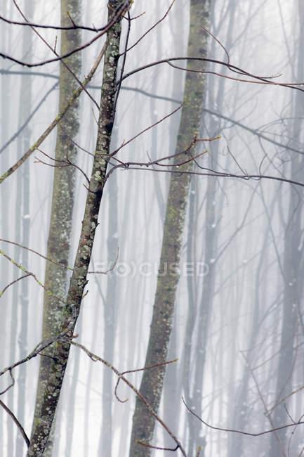 Полный кадр выстрел туманных зимний лес — стоковое фото