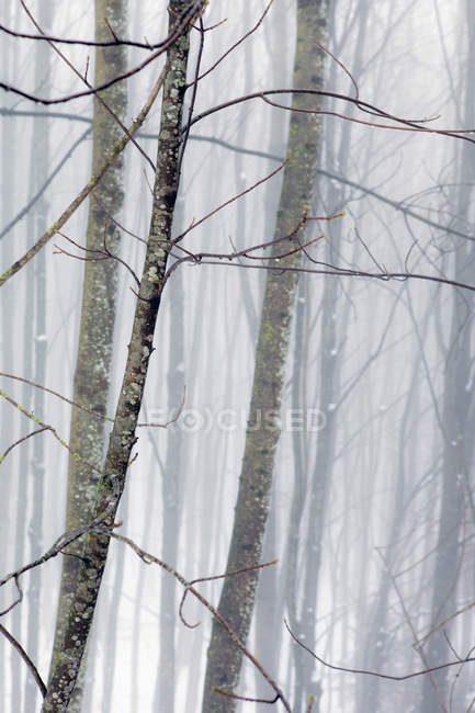 Full frame shot of hazy winter forest — Stock Photo