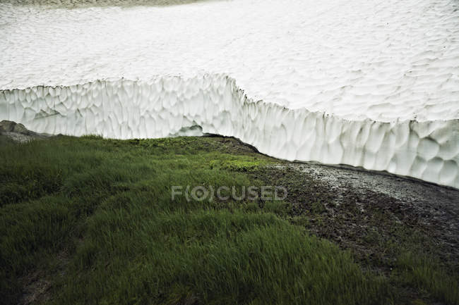 Green grass growing next to huge Glacier — Stock Photo