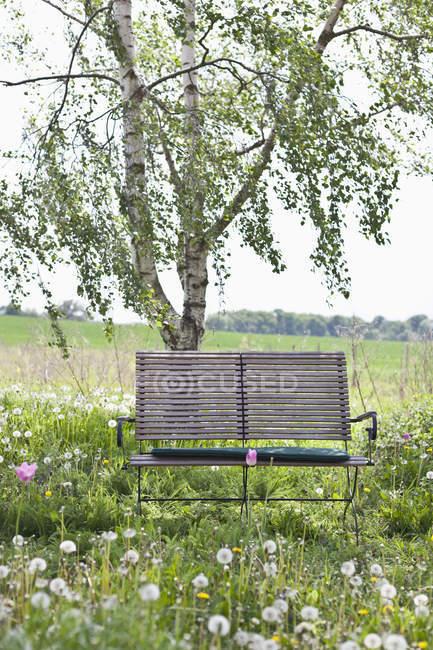 Um banco de madeira no campo — Fotografia de Stock