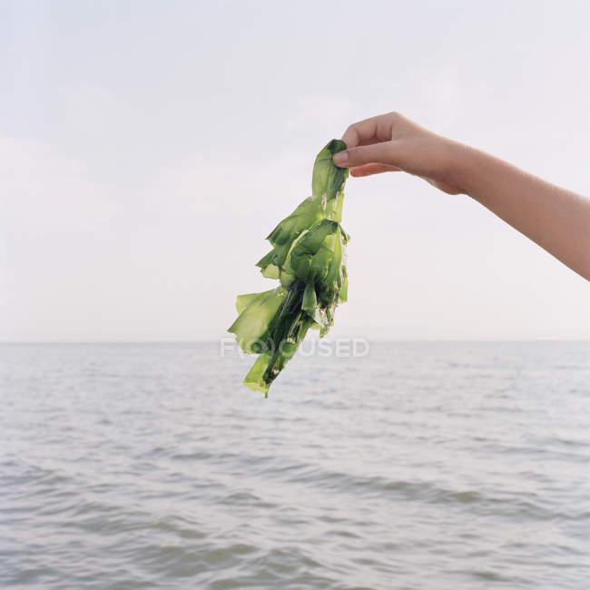 Ernte-weiblich halten Algen gegen Seestück — Stockfoto