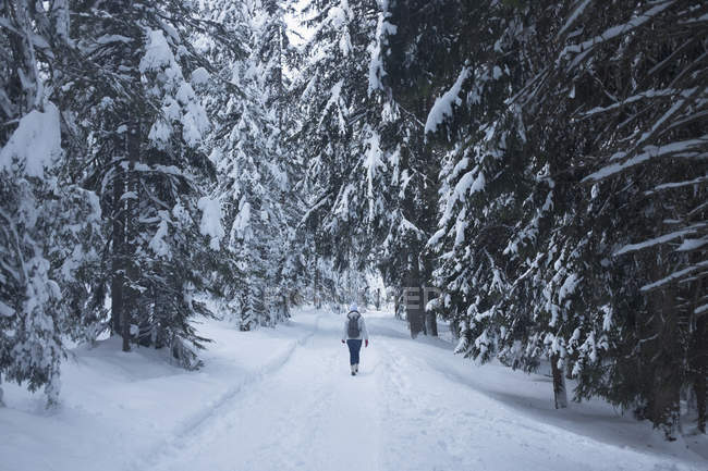 Vista traseira da mulher caminhando na neve coberta de campo no meio de árvores — Fotografia de Stock