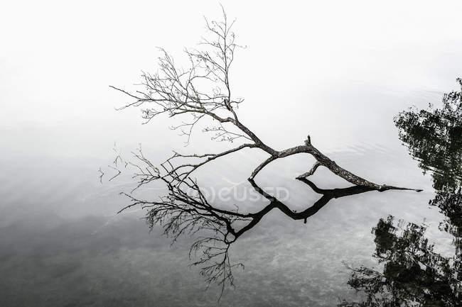 Упавшее дерево в озере — стоковое фото