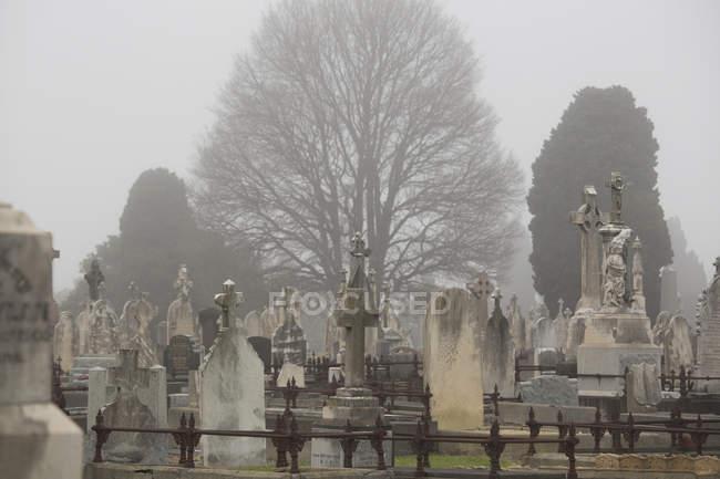Blick auf Grabsteine auf dem Friedhof am nebligen Tag — Stockfoto