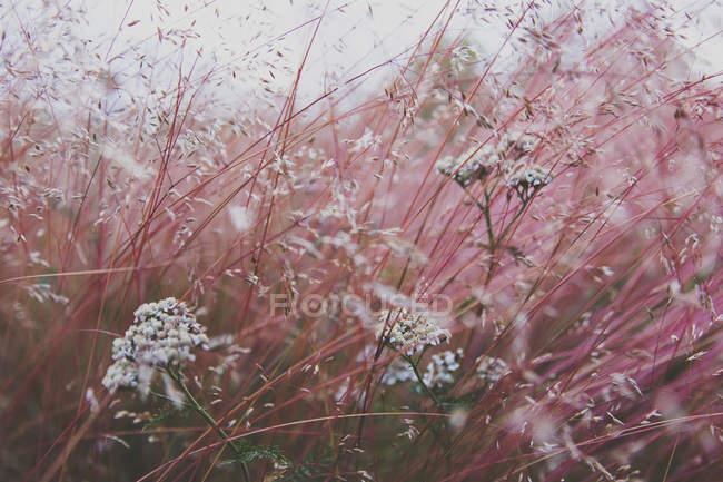 Cerrar vista de flores rosadas, crece en el campo - foto de stock