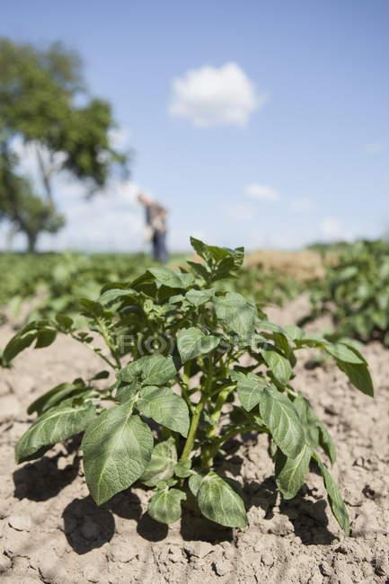 Close-up da planta no jardim com homem jardinagem no fundo — Fotografia de Stock