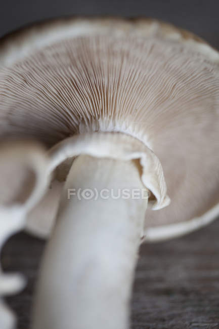 Close up view of mushroom membranes — Stock Photo