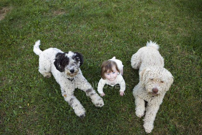Portrait of Baby girl with Portuguese Water Dogs lying on grass — Stock Photo