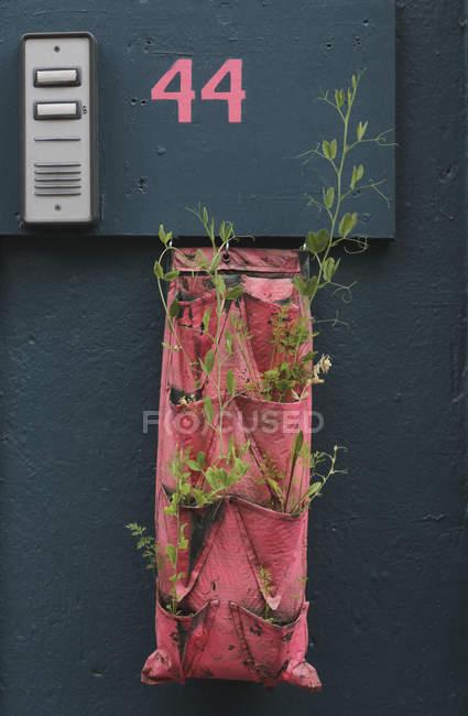 Saplings em tecido pendurado abaixo do sinal de informação na parede — Fotografia de Stock