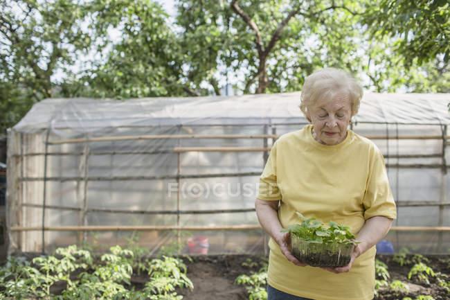 Una mujer mayor cultivando un huerto, invernadero en fondo - foto de stock